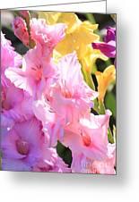 Glorious Summer Gladiolus Greeting Card