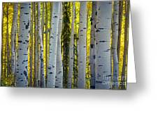 Glowing Aspens Greeting Card