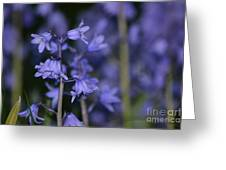 Glowing Blue Bells Greeting Card by Aqil Jannaty