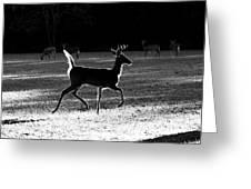 Glowing Buck Greeting Card