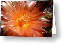 Glowing Cactus Flower Greeting Card