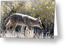 Glowing Coyote  Greeting Card
