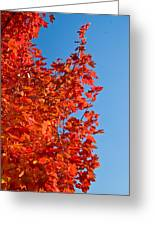 Glowing Fall Maple Colors 1 Greeting Card