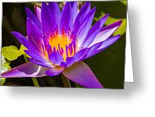 Glowing From Within Greeting Card