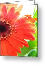 Glowing Greeting Card by Lorraine Heath