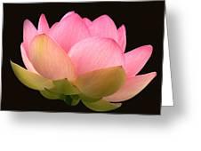 Glowing Lotus Square Frame Greeting Card