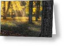 Glowing Maples Square Greeting Card