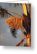 Glowing Palm Blossoms Greeting Card