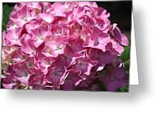 Glowing Pink Hydrangea Greeting Card