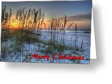 Glowing Sea Oats Sunrise Greeting Card