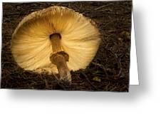 Glowing Shaggy Mane Mushroom Greeting Card