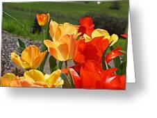Glowing Sunlit Tulips Art Prints Red Yellow Orange Greeting Card
