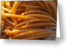 Glowing Tangle Of Kelp Greeting Card by Sarah Crites