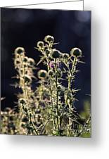 Glowing Thistle - 2 Greeting Card