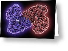 Gmp Synthetase Enzyme Greeting Card