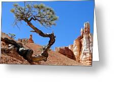Gnarled Pine In Bryce Canyon Utah Greeting Card
