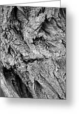 Gnarled Wood Greeting Card