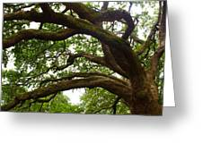 Gnarly Oak Greeting Card