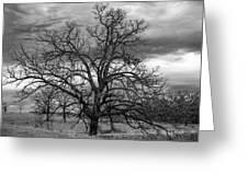 Gnarly Tree Greeting Card
