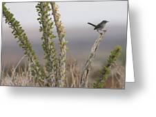 Gnatcatcher On An Ocotillo Greeting Card