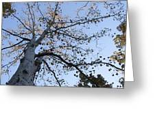 Go Climb A Tree Greeting Card