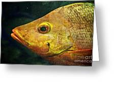 Go Fish Greeting Card by Pam Vick