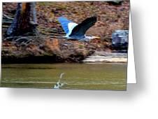 Go Heron Go Greeting Card