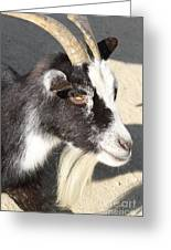 Goat 7d27405 Greeting Card