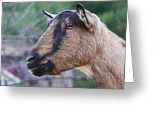 Goat In Profile Greeting Card