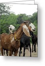 Goat Life Greeting Card