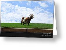 Goat On A Sod Roof In Sister Bay In Wisconsin Greeting Card