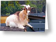Goat On The Roof Greeting Card