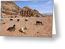 Goats In Front Of The Monastery At Petra In Jordan Greeting Card