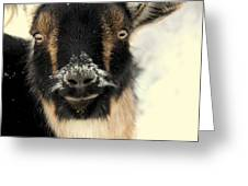 Goatstache Greeting Card