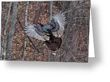 Gobbler In Flight Greeting Card