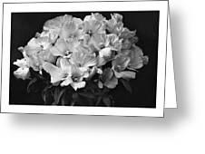 Godetia Wild Roses Greeting Card