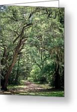 God's Canopy Greeting Card