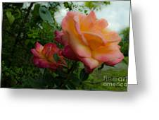 God's Roses Greeting Card
