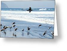 Godwits Landing On Pacific Coast Beach Greeting Card