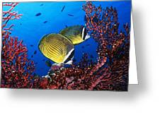 Going For A Swim Greeting Card by Cole Black