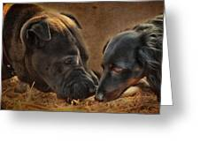 Going Nose To Nose Greeting Card