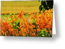 Gold And Orange Landscape Greeting Card