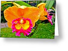 Gold And Pink Orchid At Maerim Orchid Farm In Chiang Mai-thailan Greeting Card