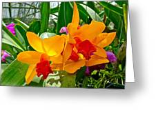 Gold And Red Orchids At Maerim Orchid Farm In Chiang Mai-thailan Greeting Card