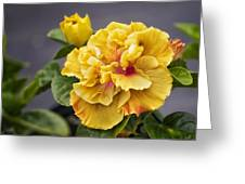 Gold Beauty Greeting Card