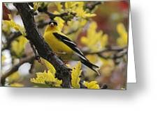 Gold Finch Gold Leaves Greeting Card