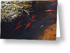 Gold Fish Swimming Greeting Card