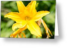 Gold Flower Greeting Card