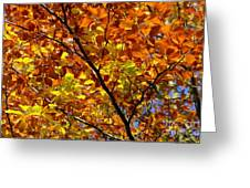 Gold Leaves Of Autumn Greeting Card