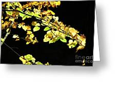 Gold On Black Greeting Card